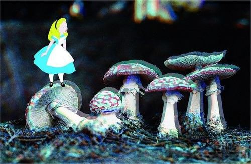 Alice-in-Wonderland-Trippy-Shrooms-If-I-became-suddenly-wealthy-I-would-use-of-my-money-to-sta-wallpaper-wp5203966