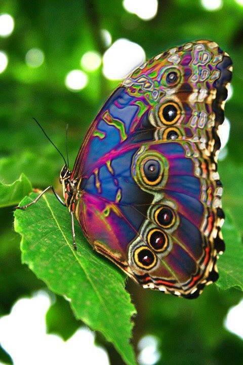 Amazing-Colorful-world-Liked-·-hours-ago-The-most-amazing-Beautiful-Butterfly-wallpaper-wp4403438