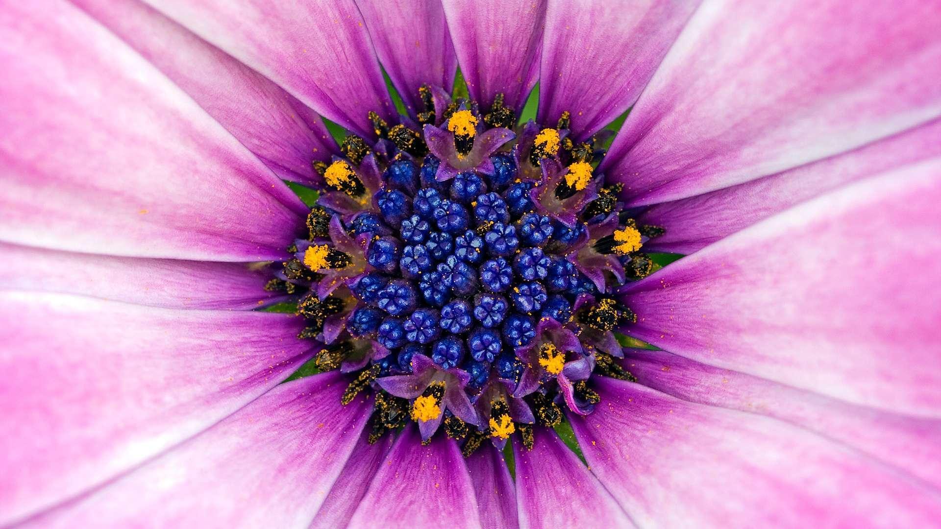 Amazing-Purple-Flower-HD-1080p-wallpaper-wp3602405