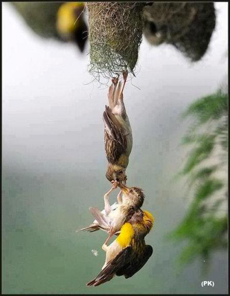 Amazing-photo-capture-of-baby-bird-being-saved-after-falling-from-the-nest-wallpaper-wp5004450