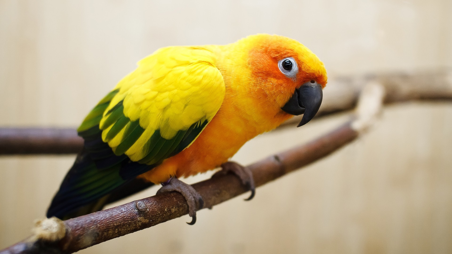 Amazon-Parrots-Desktop-Image-1920x1080-See-more-on-Classy-Bro-wallpaper-wp3402317