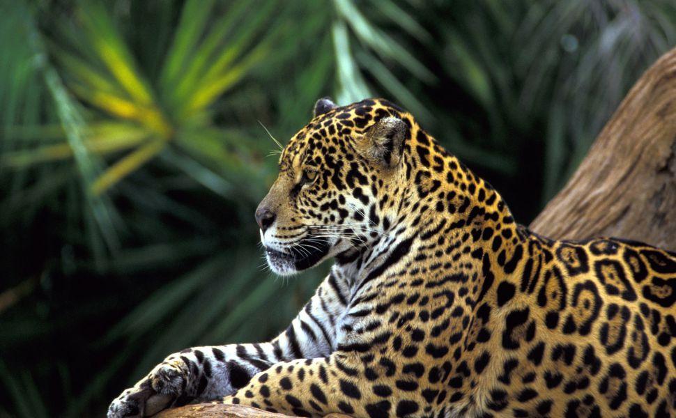 Amazon-Rainforest-HD-wallpaper-wp3402319