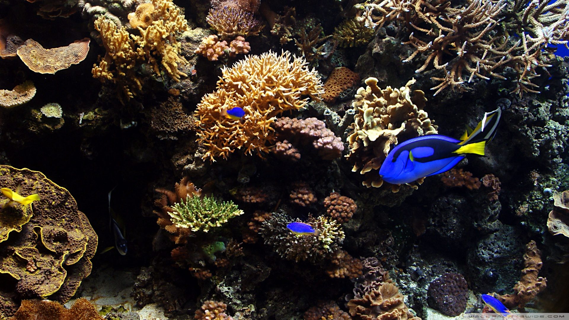 Aquarium-HD-wallpaper-wp5803599