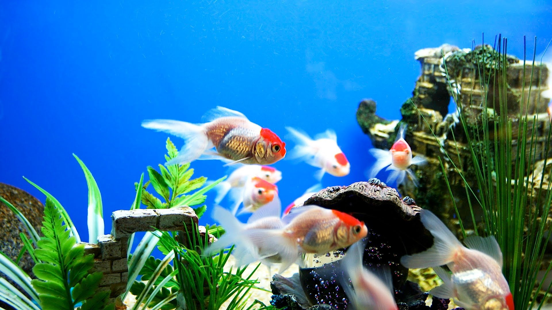 Aquarium-Live-for-PC-wallpaper-wp3602679