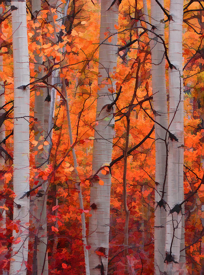 Aspens-Photograph-Autumn-Splendor-by-Don-Schwartz-wallpaper-wp4003118