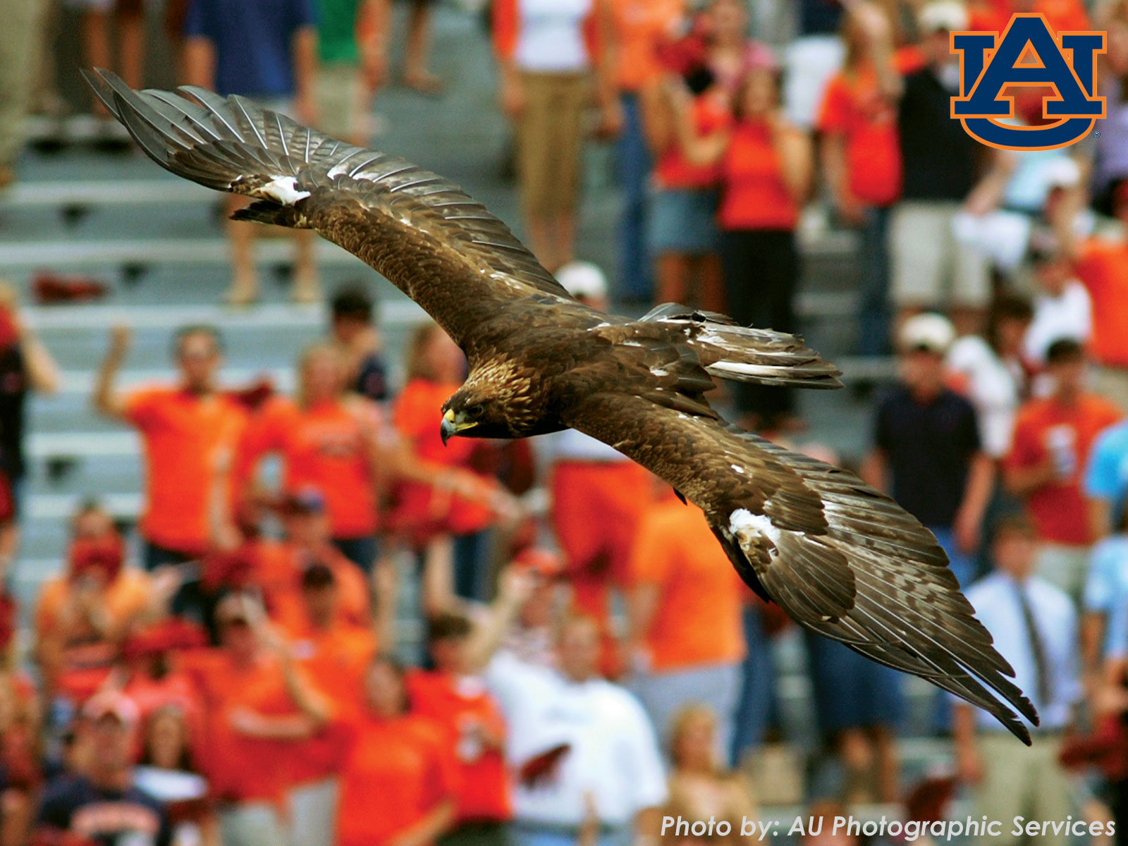 Auburn-Football-of-Communications-and-Marketing-Auburn-University-wallpaper-wp6002116