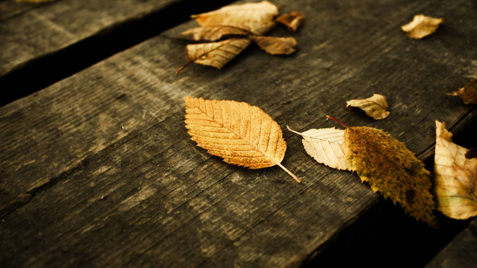 Autumn-Falling-Leaf-Exclusive-HD-wallpaper-wp3402687