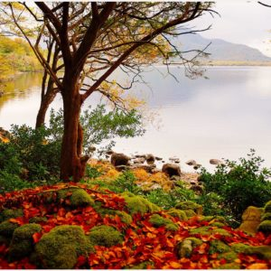 Autumn-Forest-Lake-Beautiful-Scenery-autumn-forest-lake-beautiful-scenery-1080-wallpaper-wp3402690