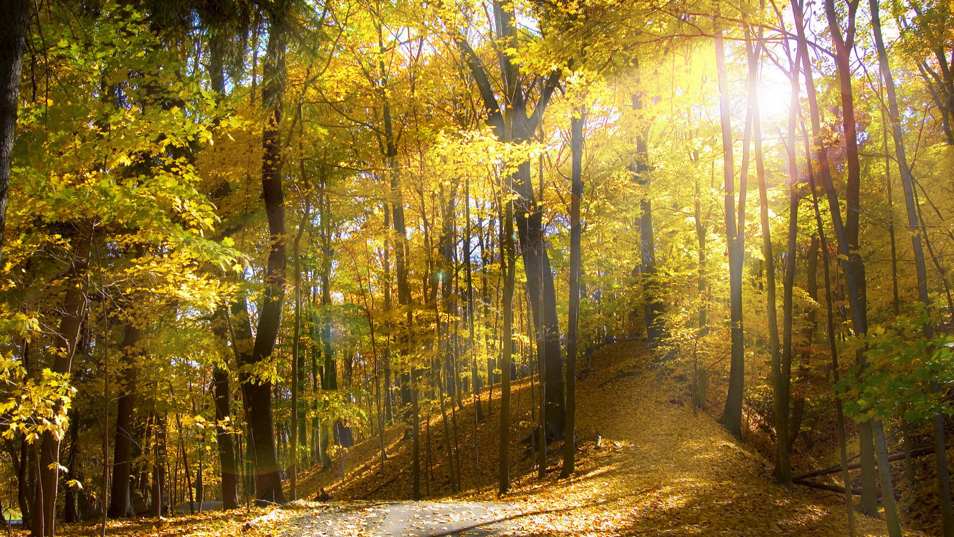 Autumn-Forest-Sunlit-Golden-1920x1080-Need-iPhone-S-Plus-Background-for-IPhoneS-wallpaper-wp3402692