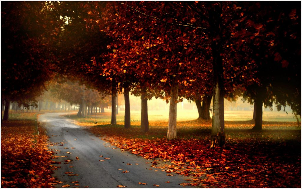 Autumn-HD-autumn-hd-autumn-hd-1080p-autumn-hd-1366x768-wallpaper-wp3402724