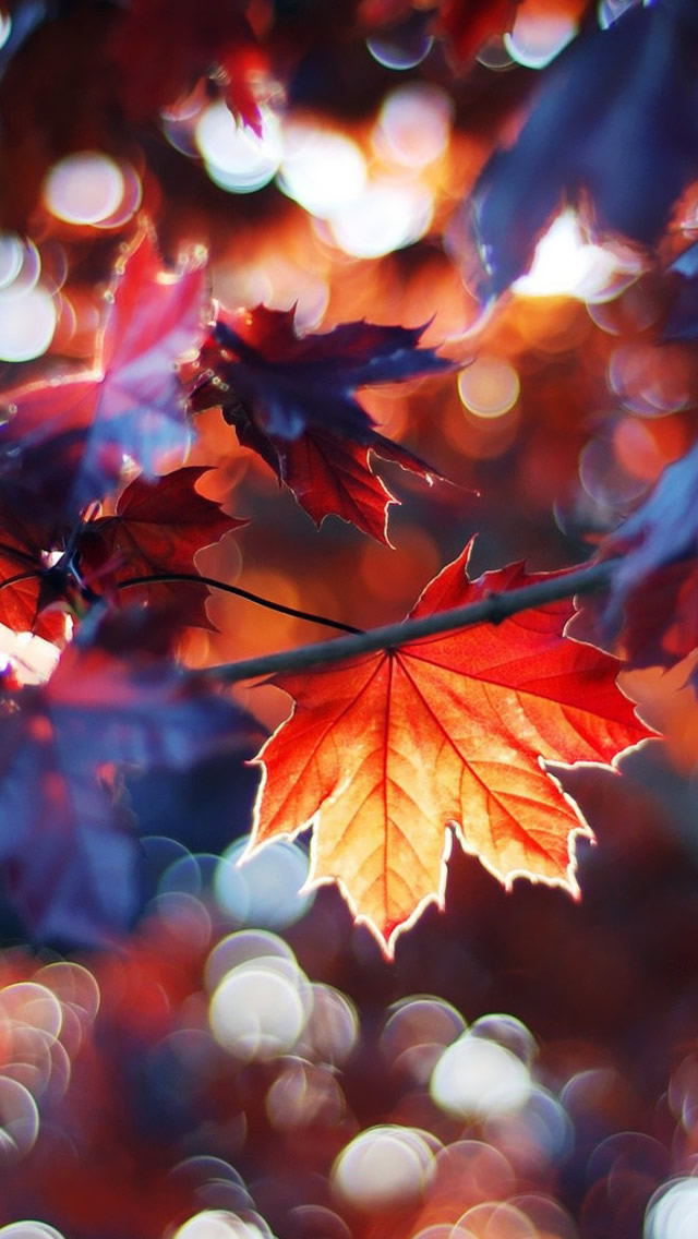 Autumn-Leaves-iPhone-s-Download-iPhone-iPad-One-stop-Download-wallpaper-wp423822