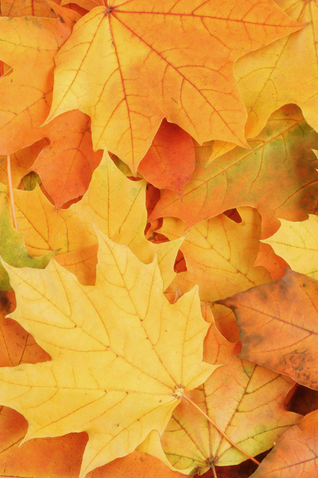 Autumn-Leaves-wallpaper-wp4003131