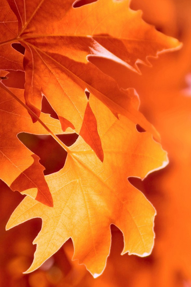 Autumn-Macro-wallpaper-wp4003132