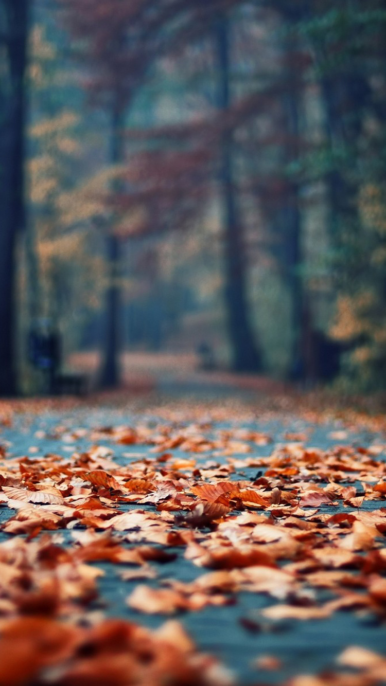 Autumn-Rusty-Leaves-Park-Alley-iPhone-wallpaper-wp423823