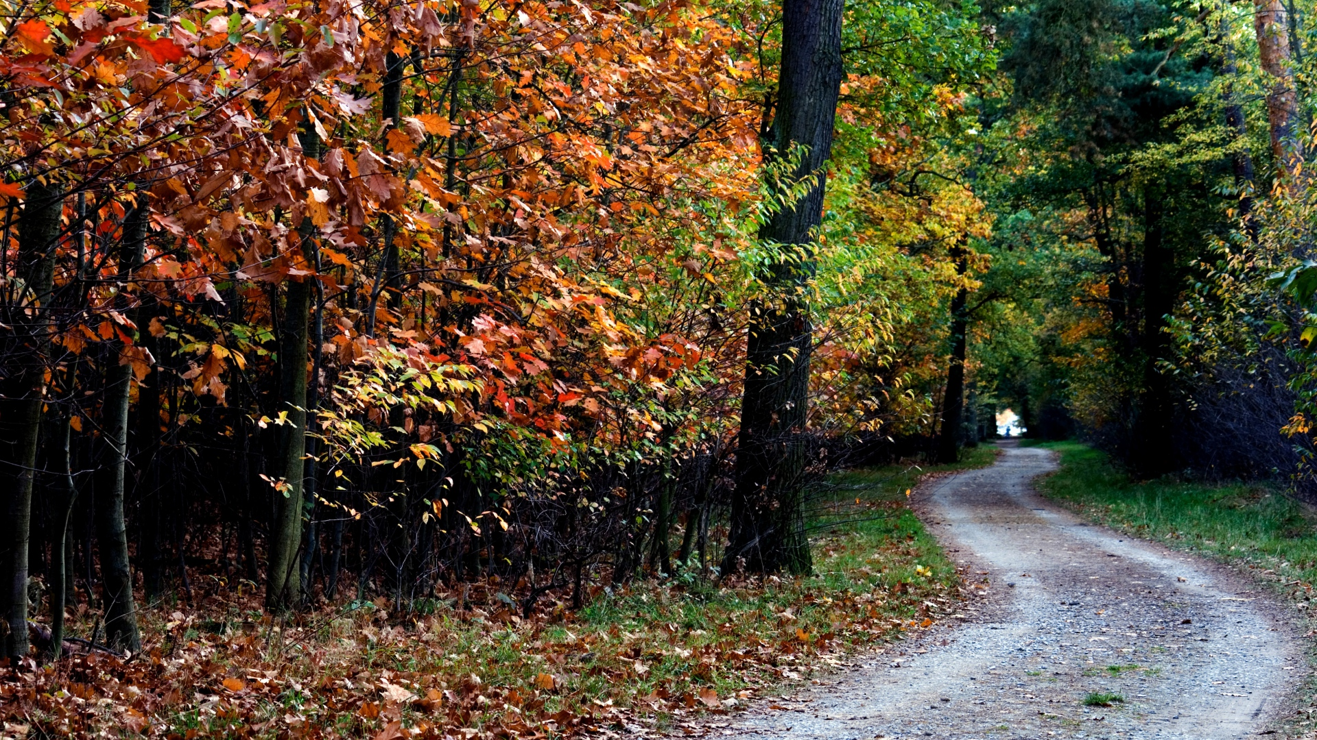 Autumn-Trail-Trees-Foliage-1920x1080-Need-iPhone-S-Plus-Background-for-IPhoneSP-wallpaper-wp3402719