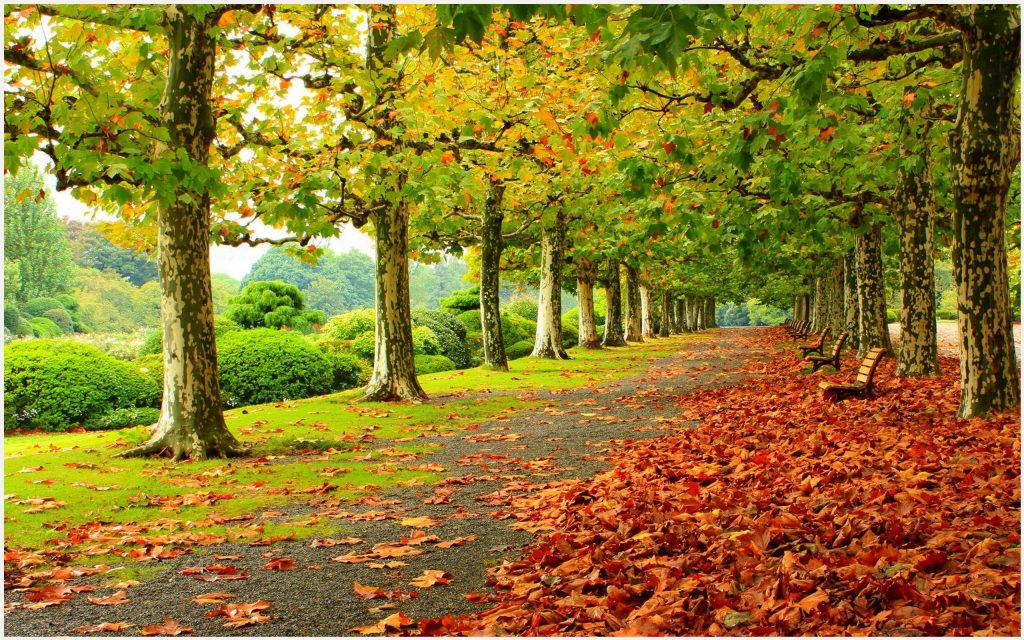 Autumn-Trees-Beautiful-Landscape-autumn-trees-beautiful-landscape-1080p-autum-wallpaper-wp3402721