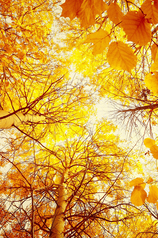 Autumn-Trees-wallpaper-wp4003135