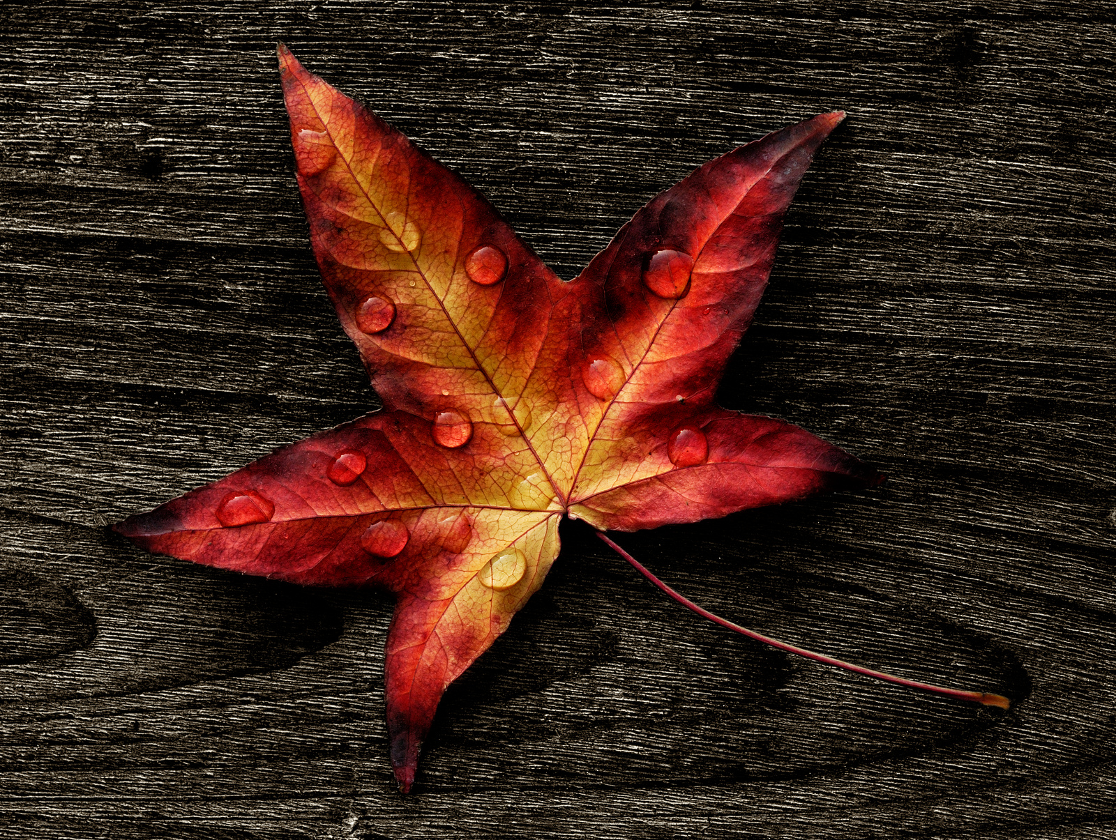 Autumn-leave-on-wooden-background-toutouke-artistwebsites-com-featured-leave-toutouke-a-y-wallpaper-wp4003130