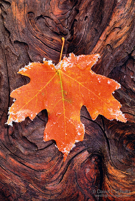 Autumn-maple-leaf-laying-on-a-log-wallpaper-wp4003133