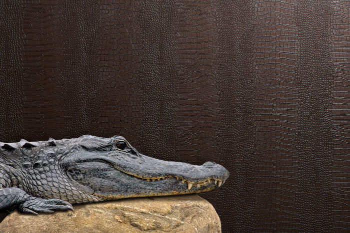 Awesome-Croc-for-man-s-office-at-http-lelands-com-Great-for-a-man-s-office-a-wallpaper-wp4404701
