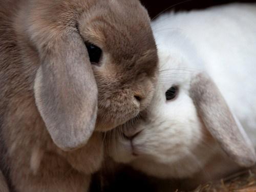 Awww-I-love-bunnies-wallpaper-wp4804418