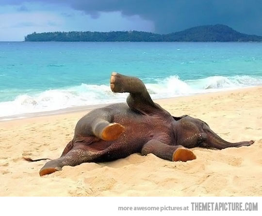 Baby-elephant-playing-in-the-beach-for-the-first-time…-wallpaper-wp5004942