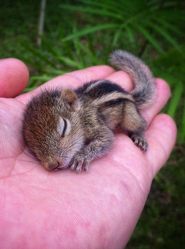 Baby-palm-squirrel-wallpaper-wp4404774