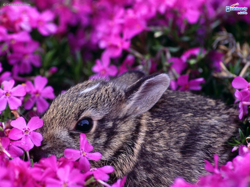"Baby-rabbits-will-always-win-the-""too-cute""-award-so-its-natural-people-want-to-hold-them-but-wallpaper-wp5204366"