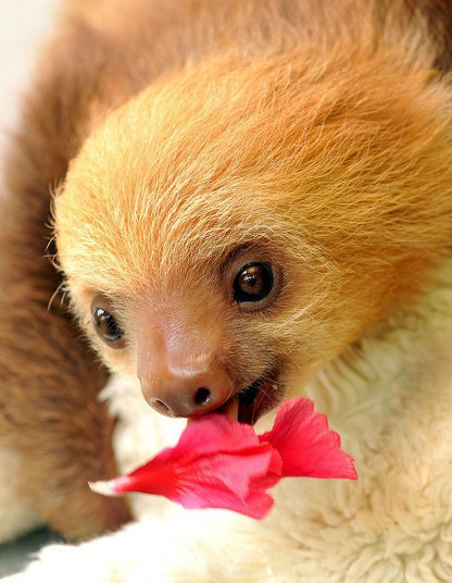 Back-To-Costa-Rica-With-The-Furrtographer-Sloth-Sanctuary-wallpaper-wp423890