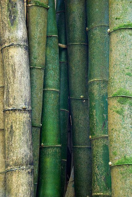 Bamboo-EresParis-Swimwear-Inspiration-Nature-Green-Bamboo-Detail-wallpaper-wp5403546