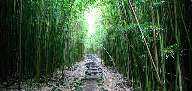 Bamboo-forrest-wallpaper-wp3402840
