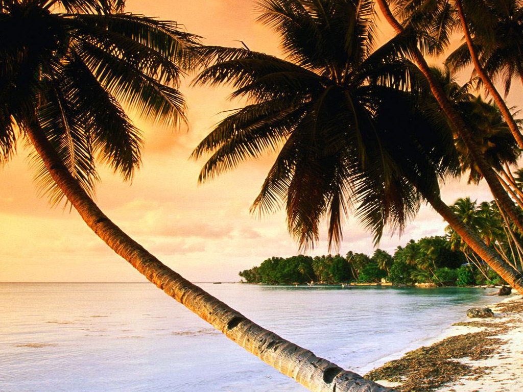 Beach-Palm-Trees-wallpaper-wp3402959