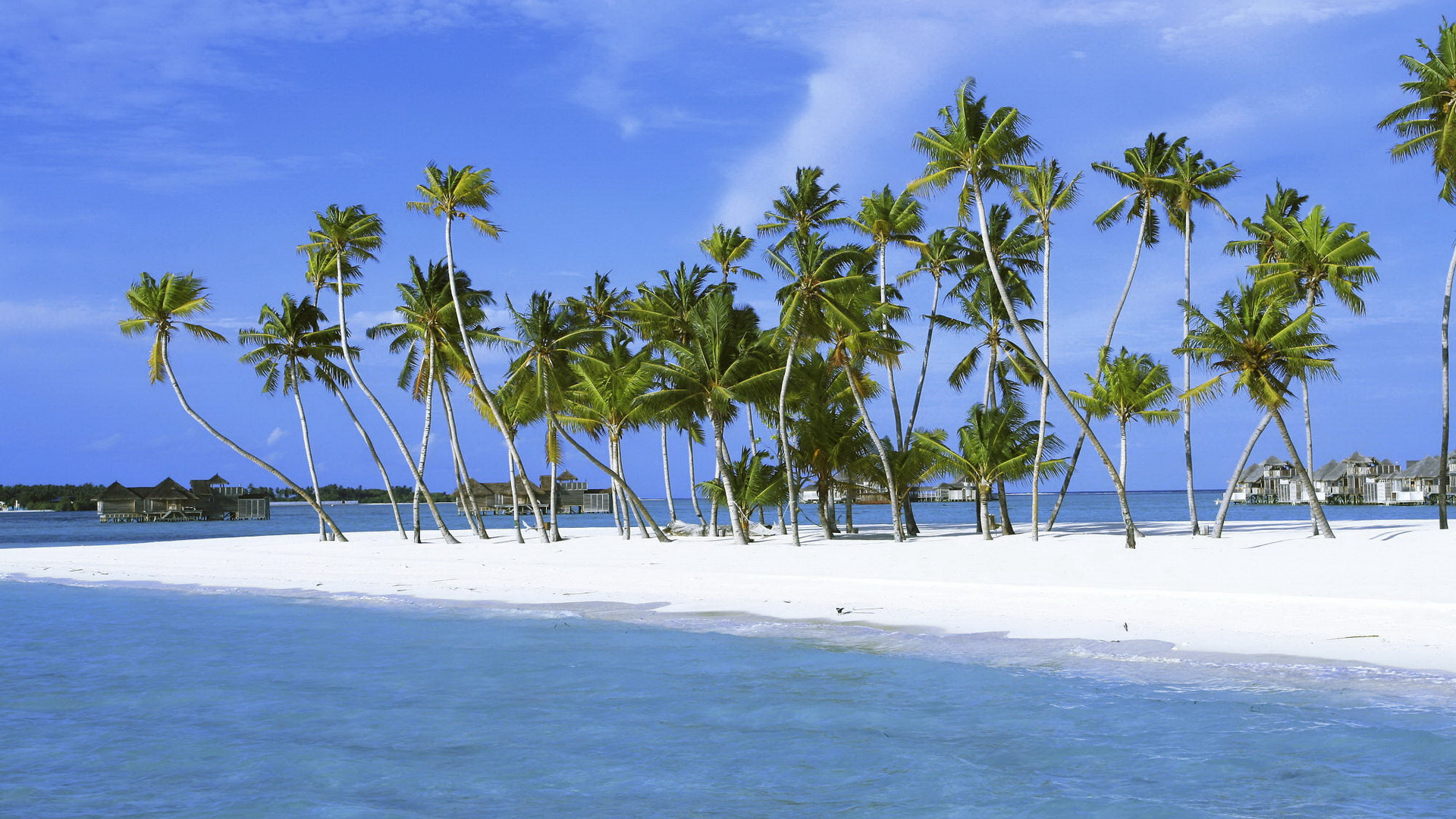 Beach-and-Awesome-Palm-trees-1920x1080-Need-iPhone-S-Plus-Background-for-IPhone-wallpaper-wp3402954