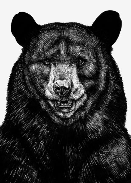 Bear-Art-Print-wallpaper-wp460125-1