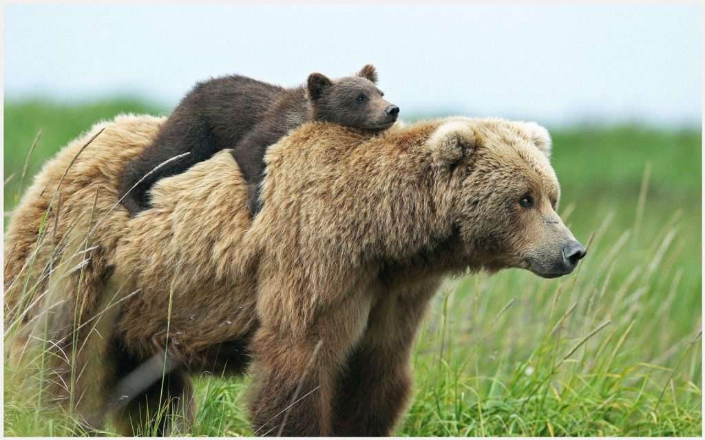 Bear-Cub-With-Mother-bear-cub-with-mother-1080p-bear-cub-with-mother-wallpape-wallpaper-wp3402964