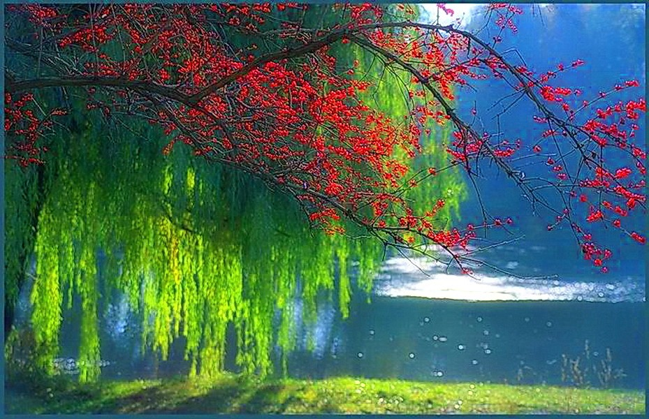Beautiful-Branches-Green-Lake-Red-Trees-Sunshine-Weeping-HD-Misc-Beautiful-Branches-Gre-wallpaper-wp3603093