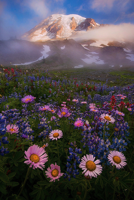 Beautiful-as-always-This-is-the-park-I-want-to-visit-the-most-Mount-Ranier-wallpaper-wp4404990
