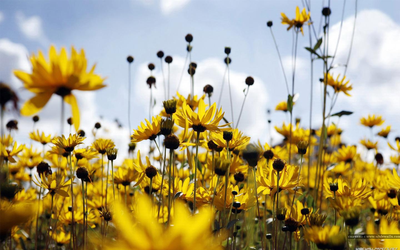 Beautiful-floral-desktop-x-px-wallpaper-wp423980-1