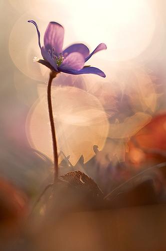 Beautiful-flower-photo-amazing-image-of-nature-wallpaper-wp4404941
