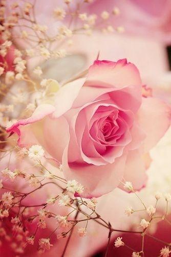 Beautiful-rose-wallpaper-wp3003562