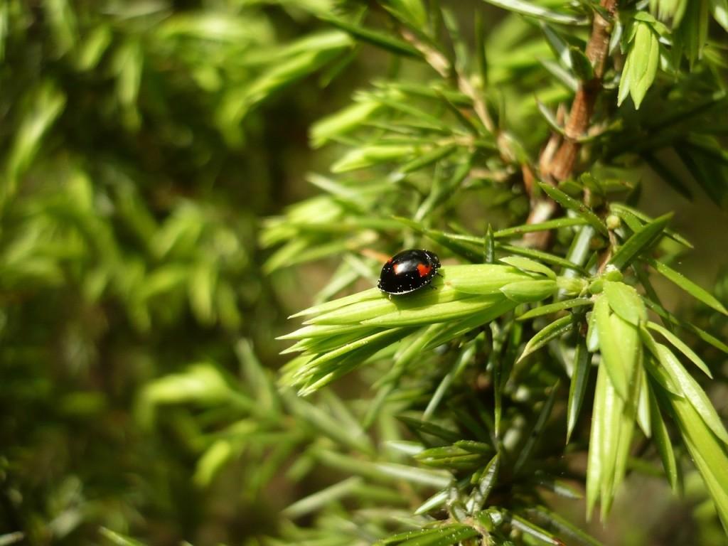 Beetle-On-The-Leaf-wallpaper-wp5403650