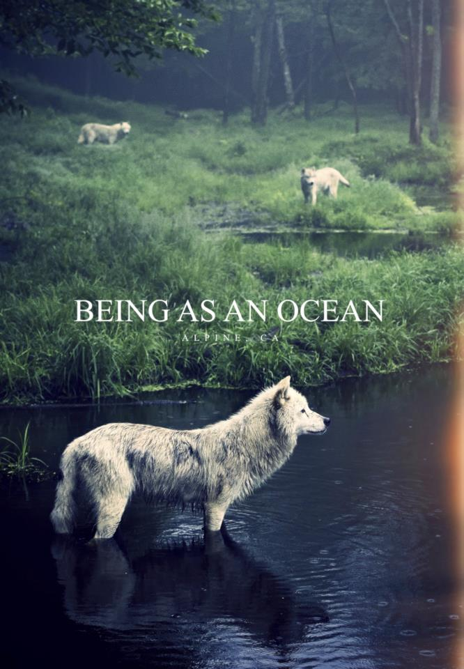 Being-As-An-Ocean-art-wallpaper-wp5403663