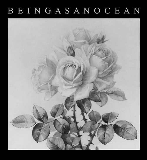 Being-As-An-Ocean-black-and-white-roses-poster-wallpaper-wp5403664