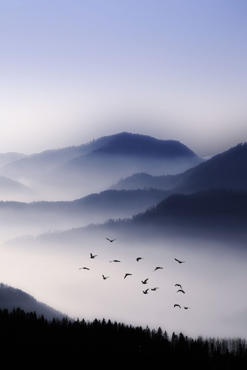 Bird-photography-nature-images-and-beauty-landscape-wallpaper-wp4405110