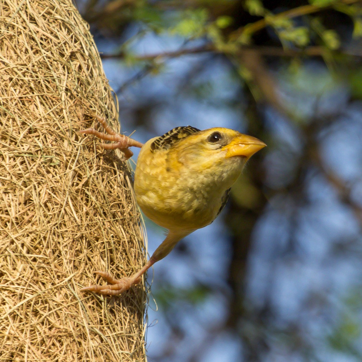 Bird-picture-gallery-by-Mukesh-Garg-s-unlimited-focus-on-bir-wallpaper-wp5804050