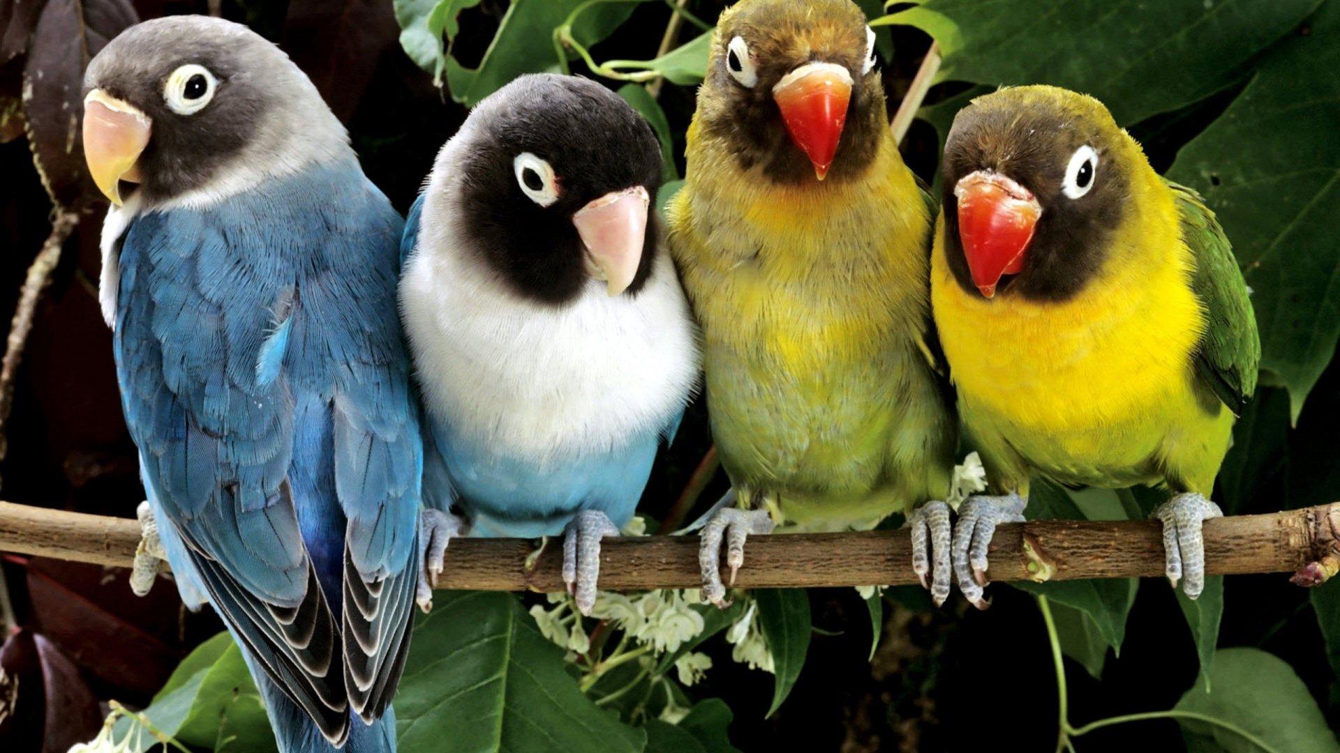 Birds-1920x1080-Need-iPhone-S-Plus-Background-for-IPhoneSPlus-Follow-wallpaper-wp3603347
