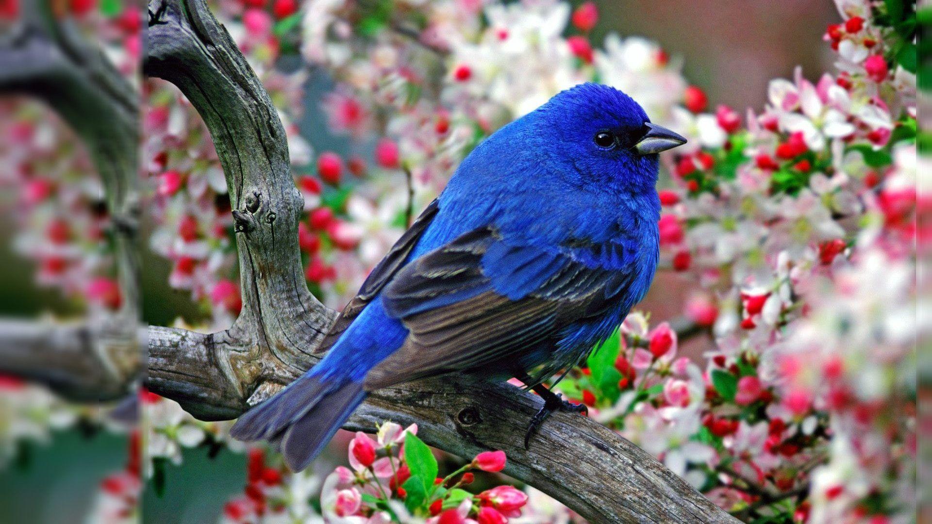 Birds-Best-HD-Photos-of-Birds-K-Ultra-HD-Birds-wallpaper-wp3603344
