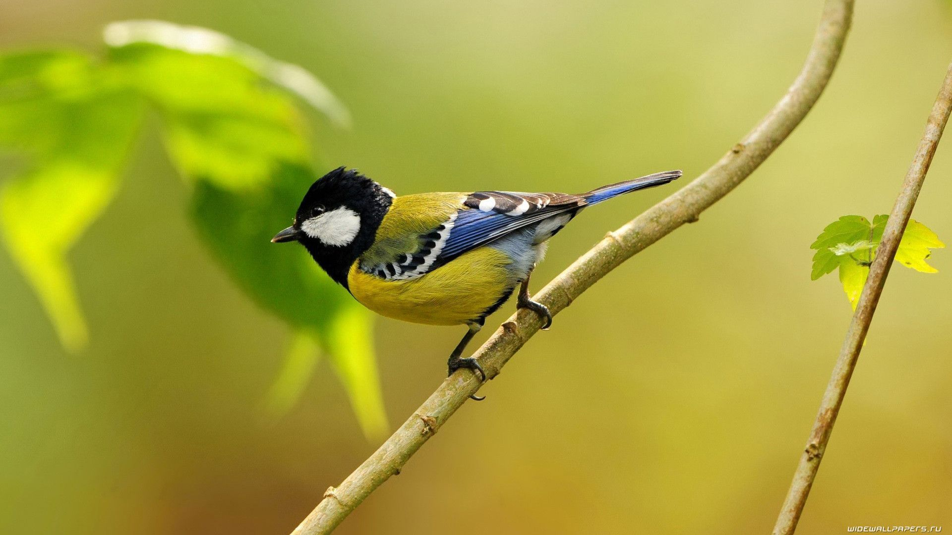 Birds-Collection-For-Free-Download-wallpaper-wp3603345