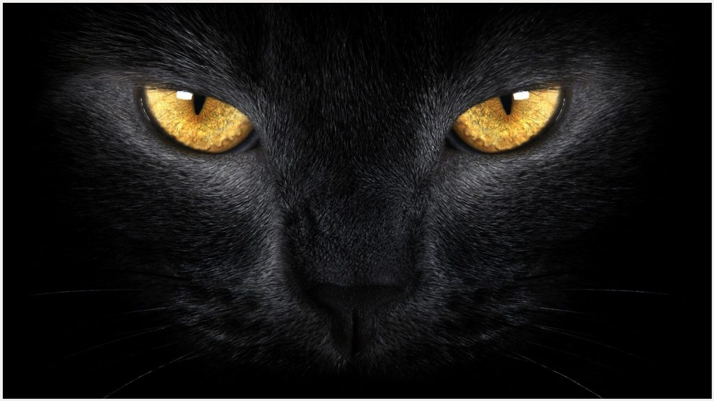 Black-Cat-Face-And-Eyes-black-cat-face-and-eyes-1080p-black-cat-face-and-eyes-wallpaper-wp3603390