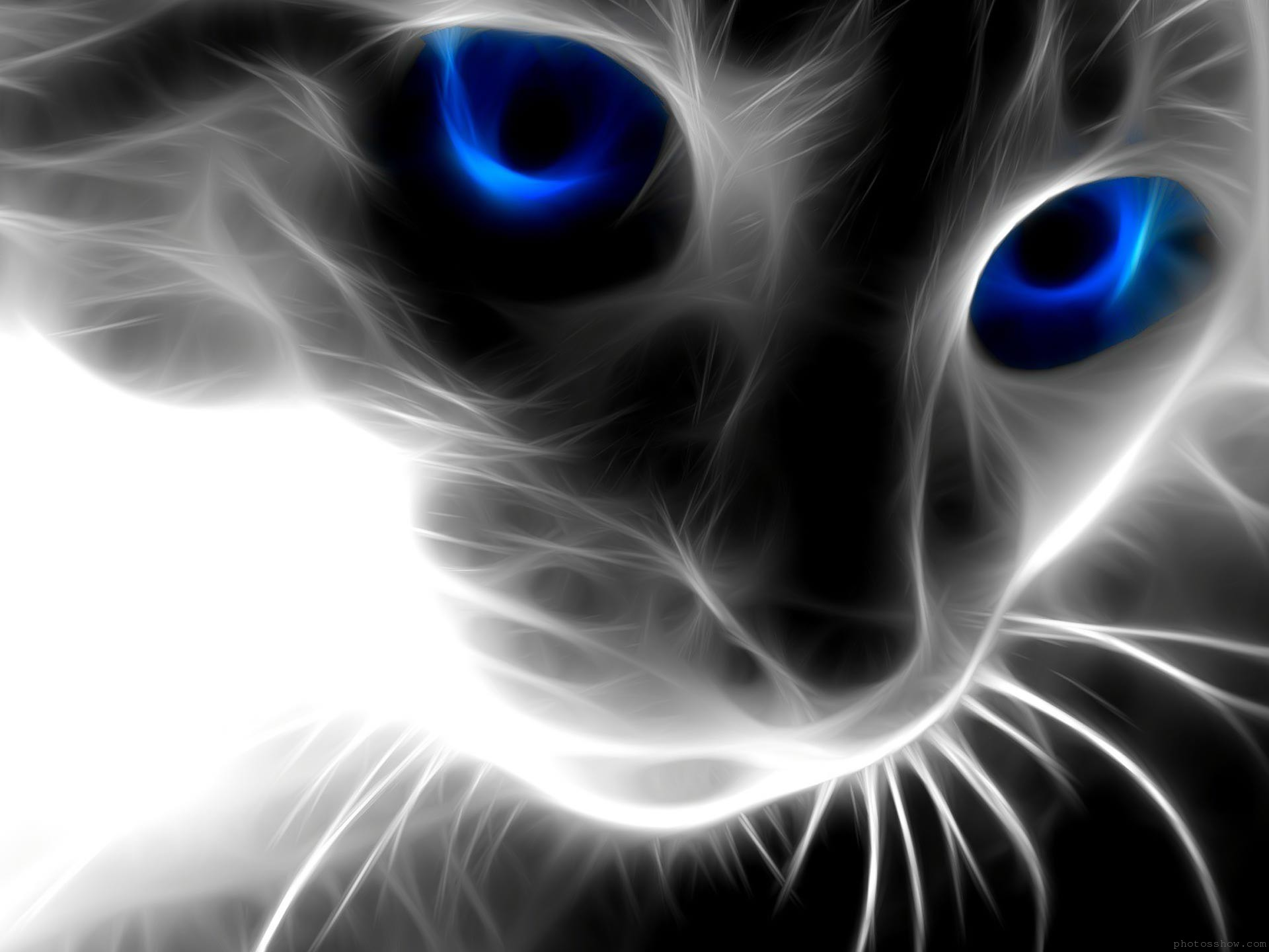 Black-Cat-With-Blue-Eyes-High-Definition-wallpaper-wp3603400